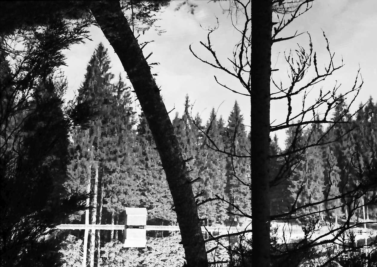 Schapbach: Glaswaldsee, Baumstämme und Spiegelung, Bild 1