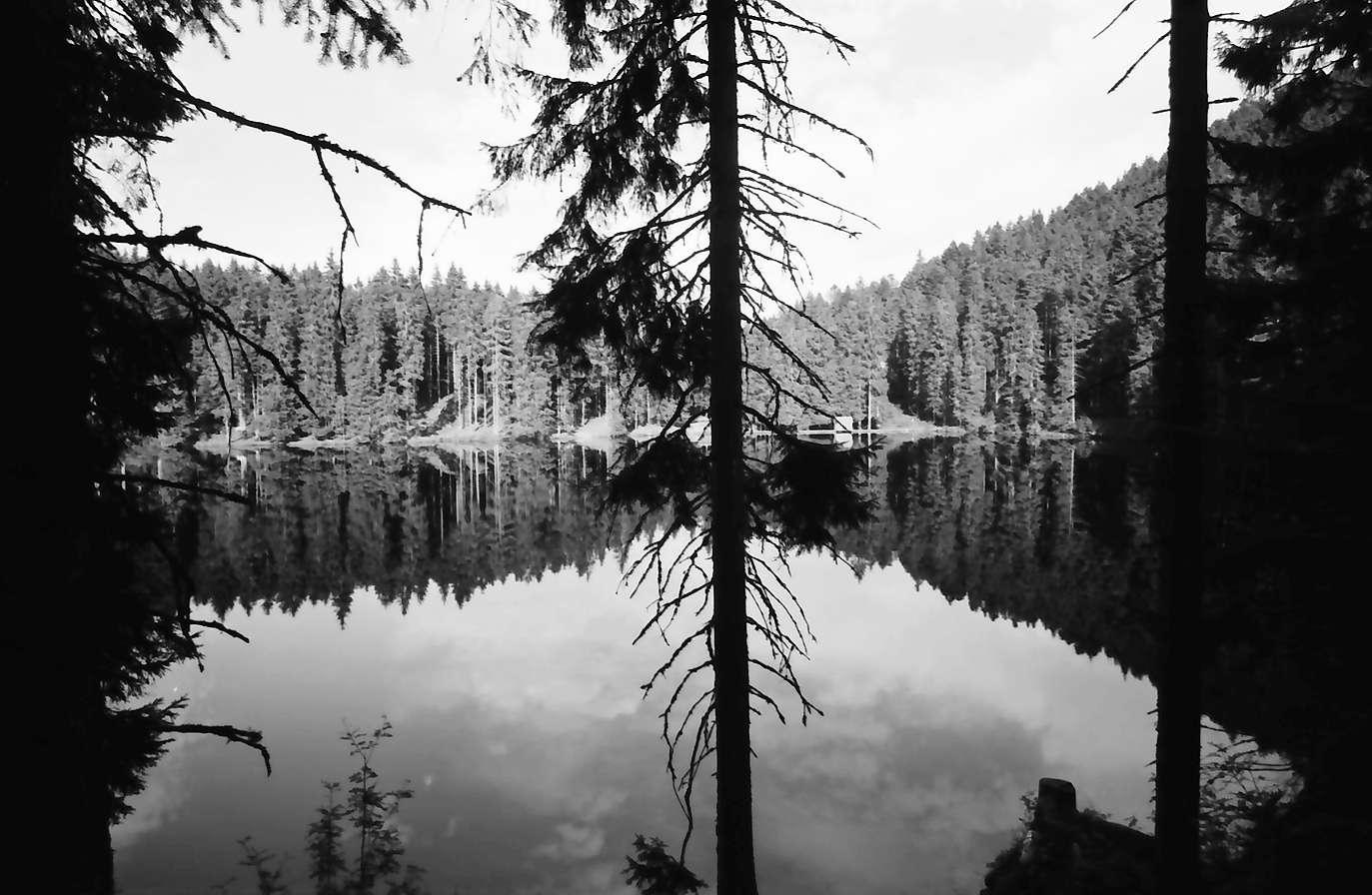 Schapbach: Glaswaldsee, Baumstämme und Spiegelung; Blick über den See, Bild 1