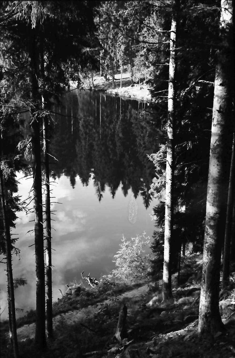 Schapbach: Glaswaldsee, Baumstämme und Spiegelung; etwas von oben, Bild 1