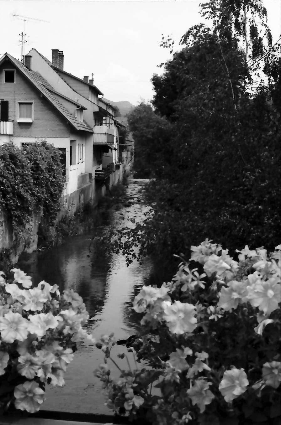 Zell am Harmersbach: Harmersbach von der Brücke, Vordergrund Blumen, Bild 1