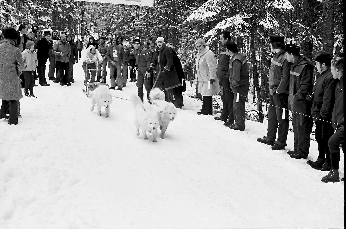 Todtmoos: Schlittenhunderennen; Start der Hundeschlitten, Bild 1