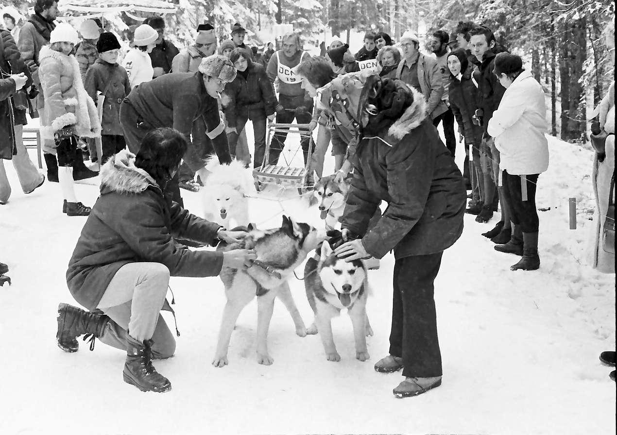 Todtmoos: Schlittenhunderennen; Start der Gespanne, Bild 1