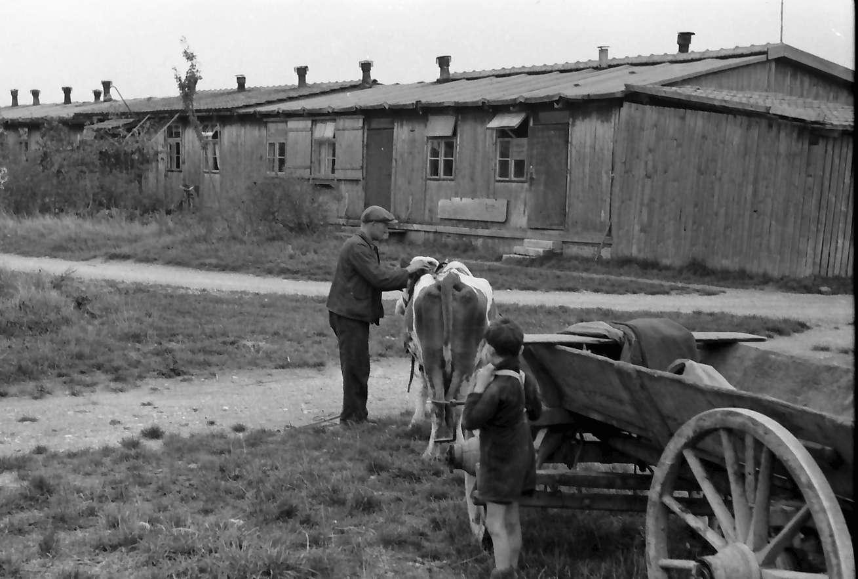 Neuenburg: Barackensiedlung; Ochsengespann vor Baracken, Bild 1