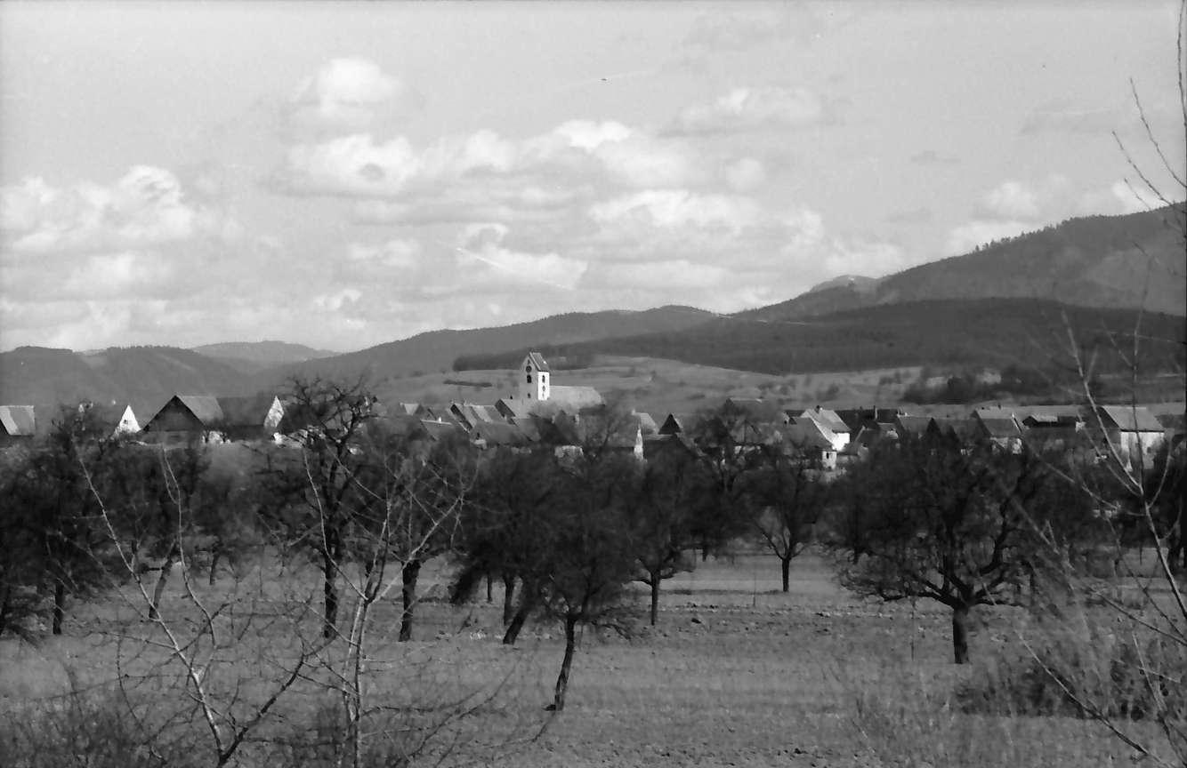 Steinenstadt: Blick aus dem Rheinwald von Westen auf Steinenstadt, Bild 1