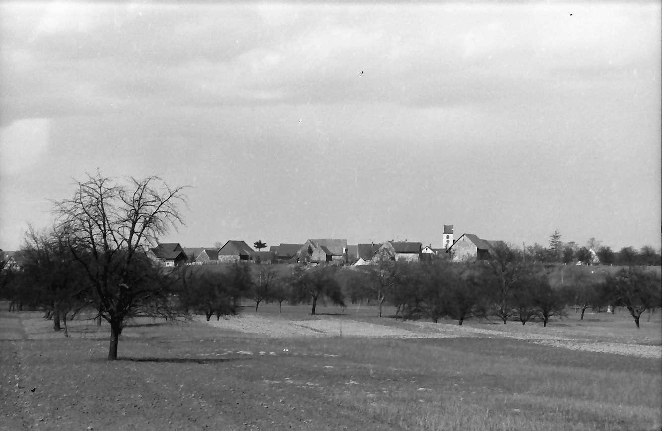 Steinenstadt: Blick aus dem Rheinwald von Süden auf Steinenstadt, Bild 1