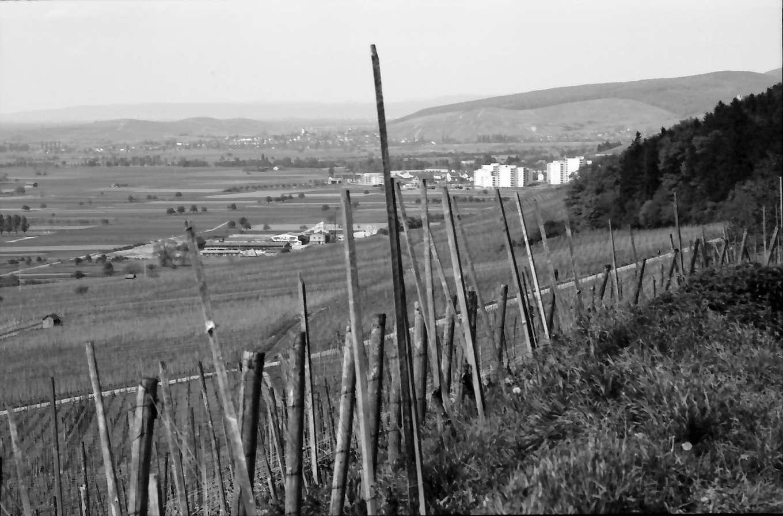 Ballrechten: Weinberg (Römerberg) mit Neubaublocks von Staufen, Bild 1