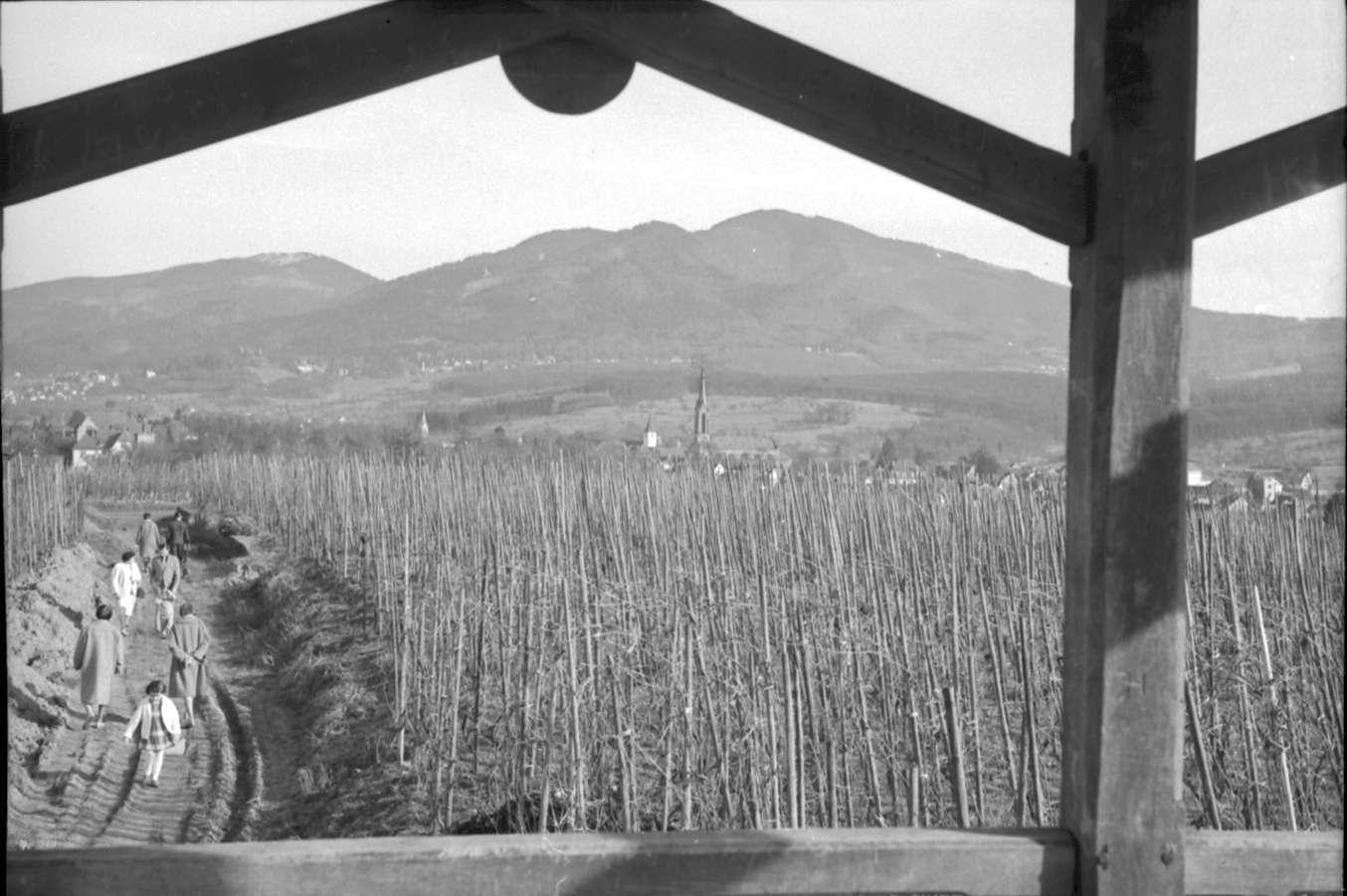 Müllheim: Blick vom Zielberg aus Pavillon über Rebhänge auf Blauen, Bild 1