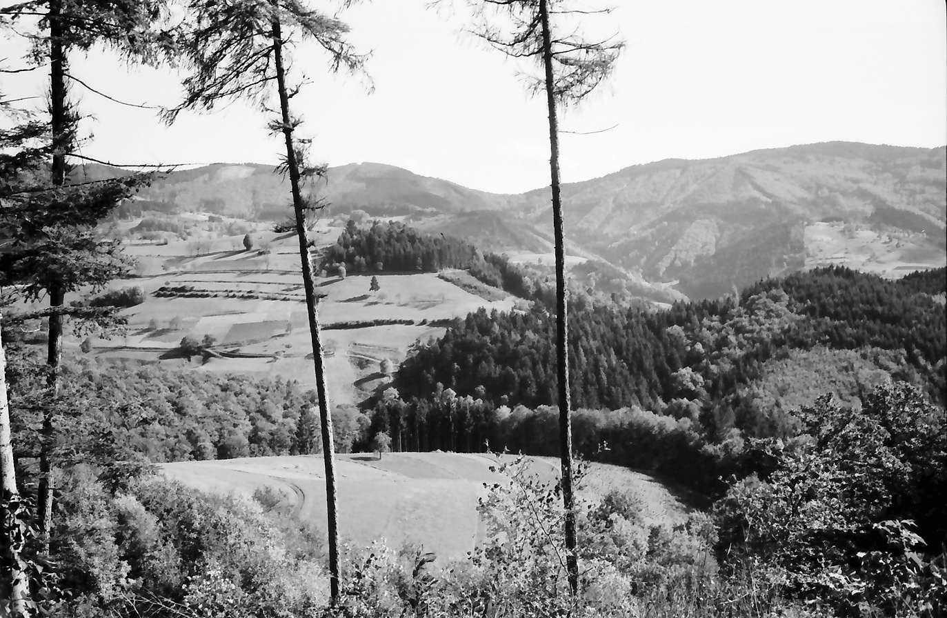 Vogelbach: vom Schlossweg auf Federlisberg, Vordergrund Lerchen, Bild 1