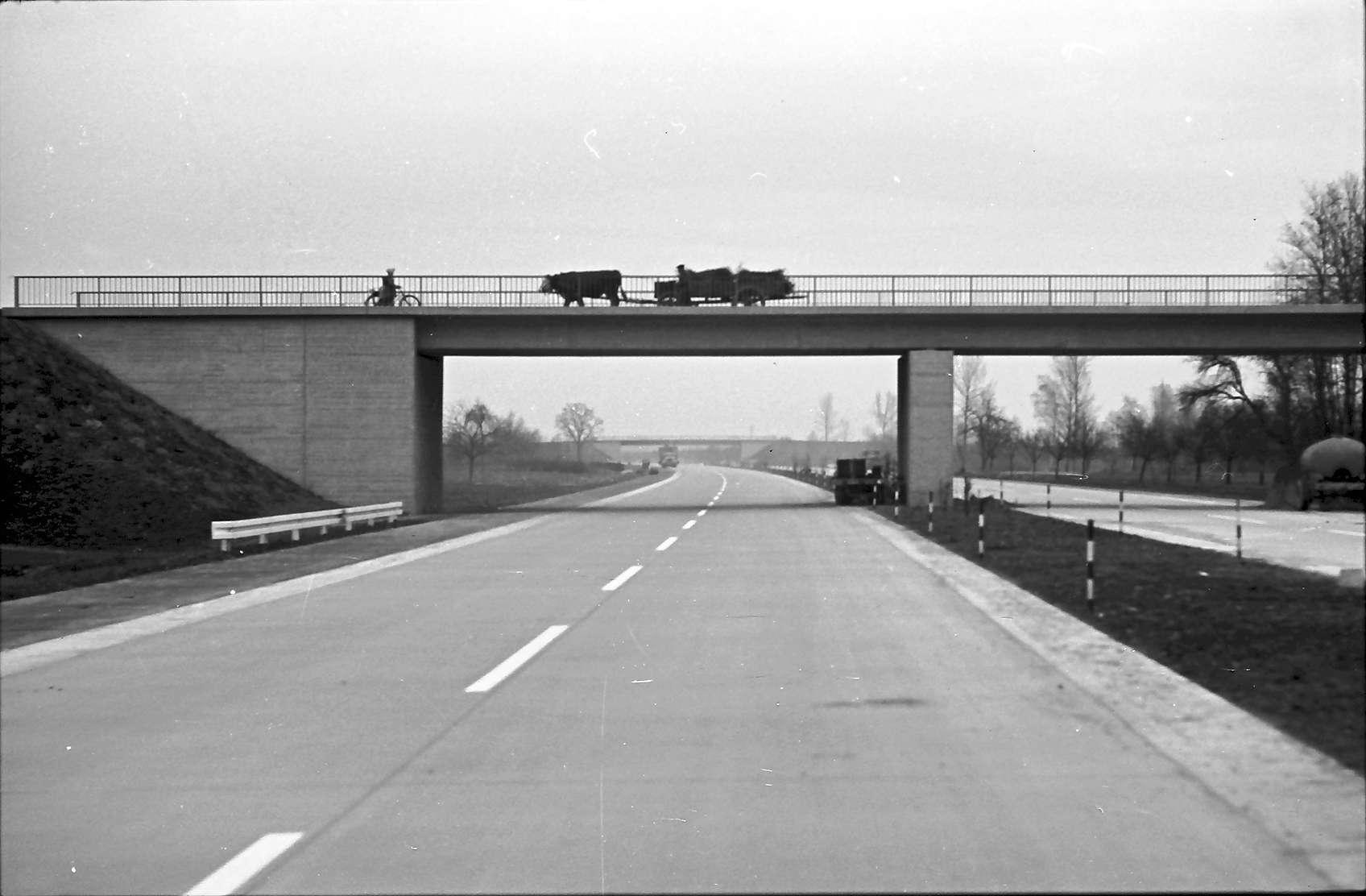 Achern: Ochsenkarren und Radfahrer auf Autobahnbrücke, Bild 1