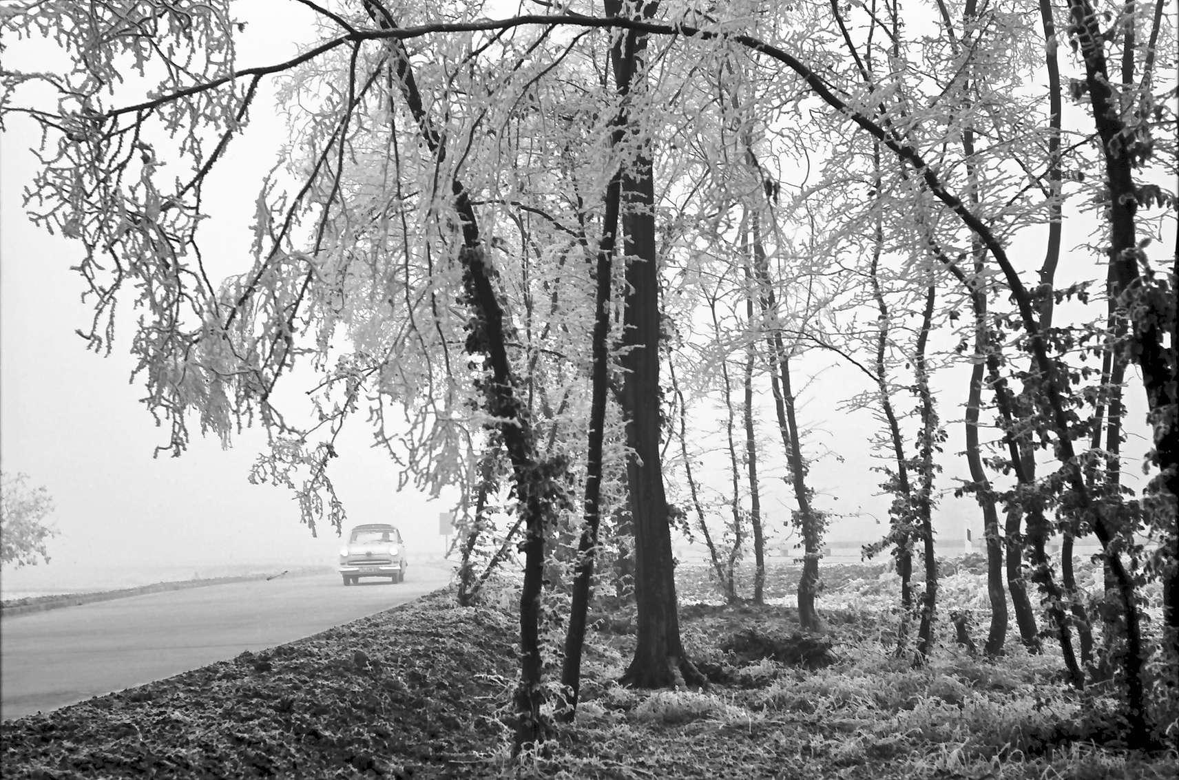 Ettenheim: Parkplatz im Rauhreif, Bild 1