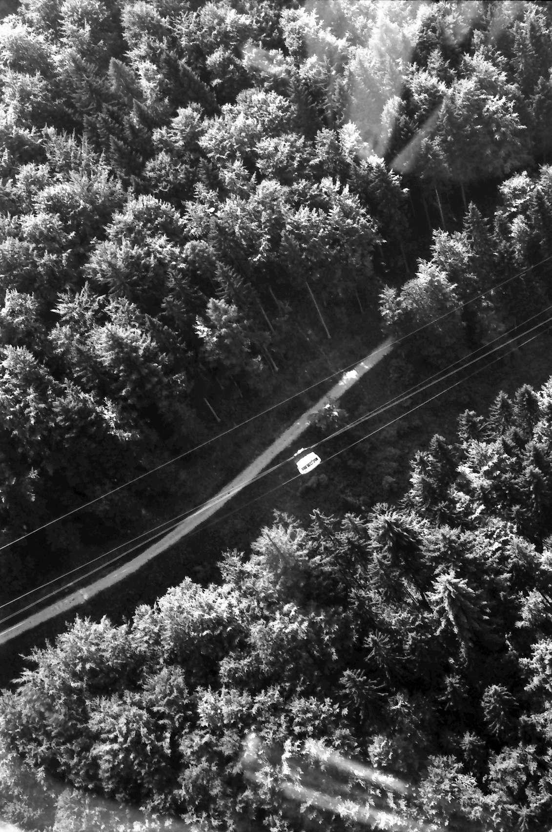 Günterstal: Seilbahn über dem Wald, Bild 1