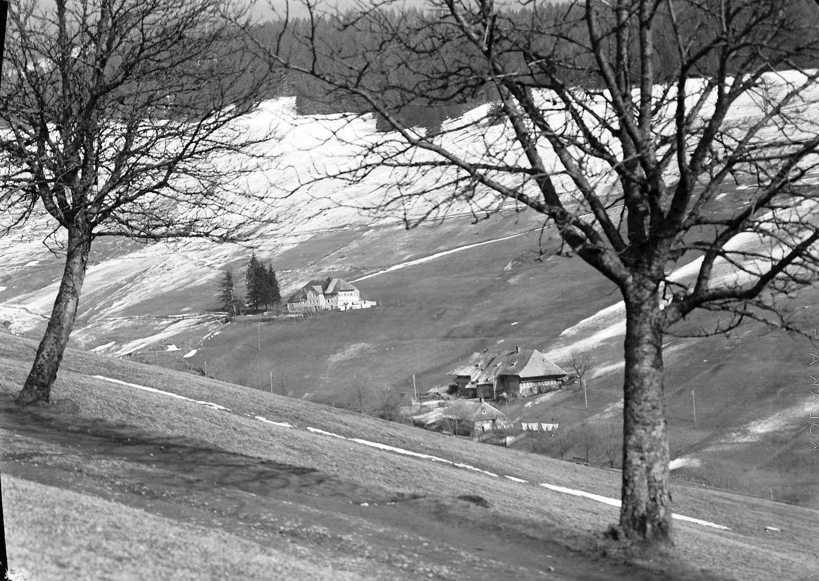 Todtnauberg: Schwarzwaldhaus im Durchblick von zwei Chausseebäumchen, Bild 1