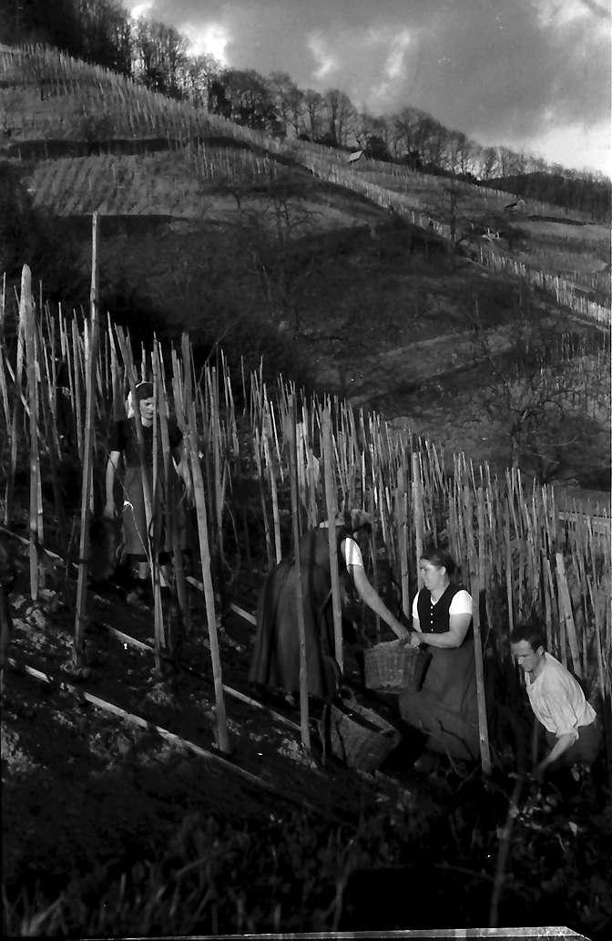 Glottertal: Weinbauern bei der ersten Frühlingsarbeit, Bild 1