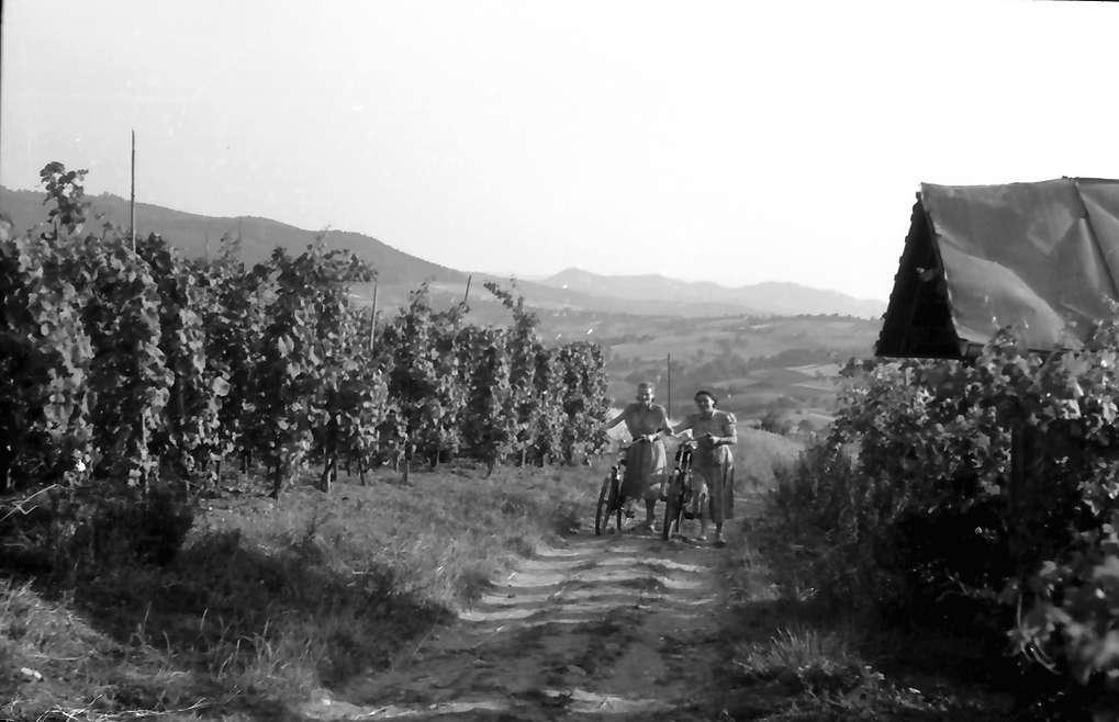 Merzhausen: Weinberge bei Merzhausen, Bild 1
