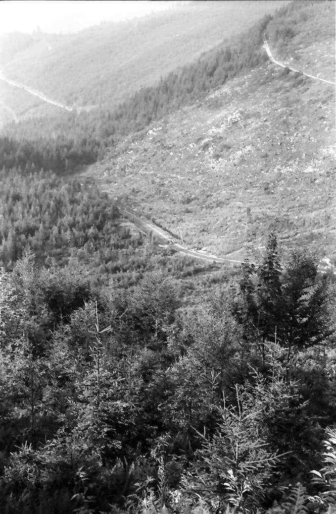 Oberried: Kahlschläge und Aufforstung im Oberrieder Tal, Bild 1