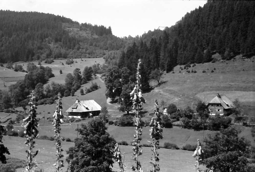 Oberprechtal: Blumen und Häuser im Tal, Bild 1