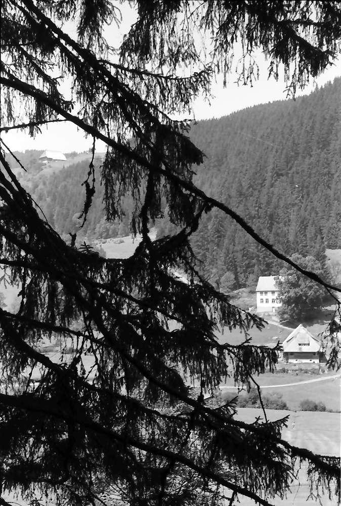 Oberprechtal: Schwarzwaldhäuser im Tal durch Tannenäste, Bild 1