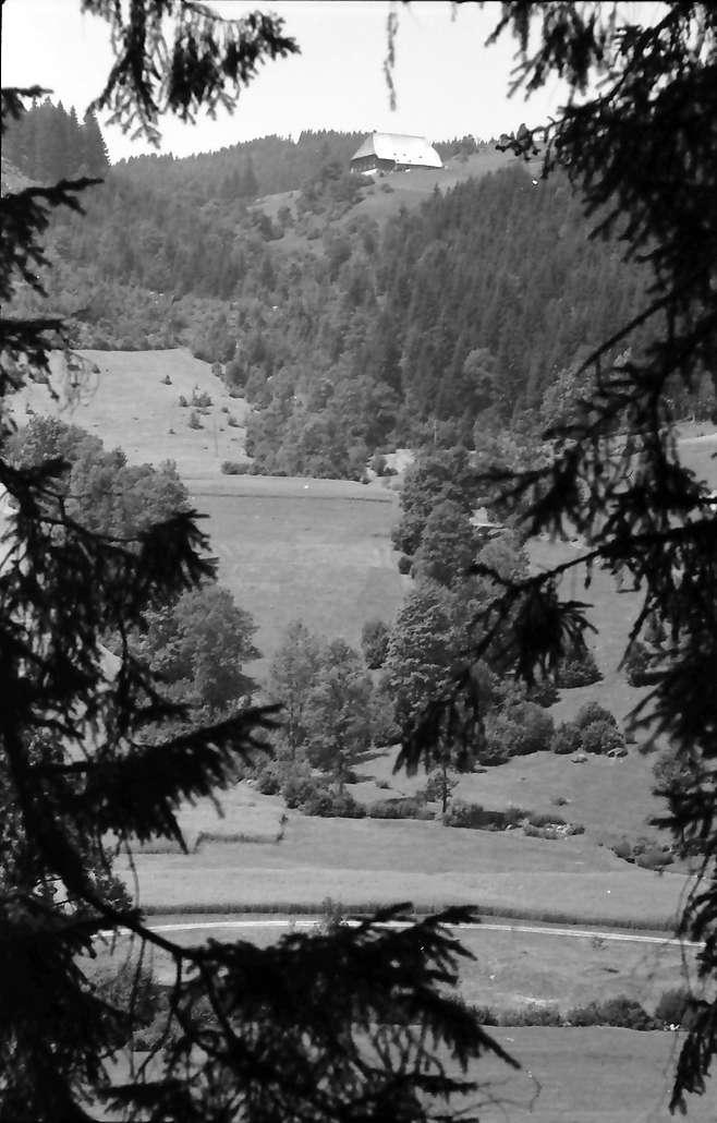 Oberprechtal: Schwarzwaldhäuser im Tal durch Tannenäste; Haus auf der Höhe, Bild 1