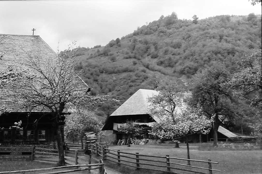 Geschwend: Schwarzwaldhäuser in Blüten, Bild 1