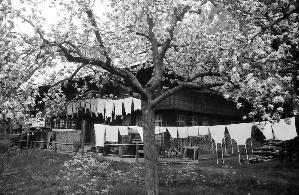 Geschwend: Schwarzwaldhäuser in Blüten; Bauernhaus mit Wäsche, Bild 1