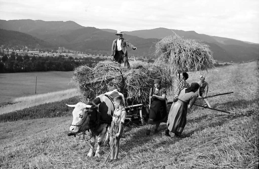 Kappel: Einbringen der Ernte mit Wagen, Schwarzwald, Bild 1