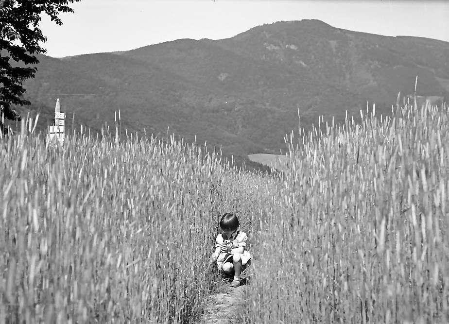 Glottertal: Kind pflückt Blumen am Kornfeld, Bild 1