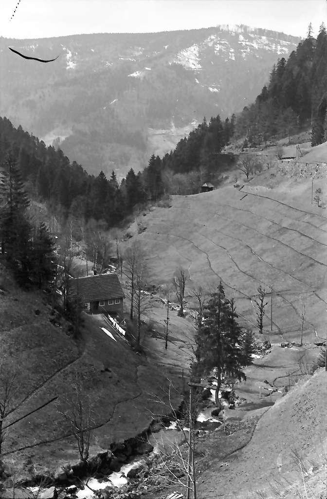 Gütenbach: Oberes Simonswäldertal bei Gütenbach, Bild 1