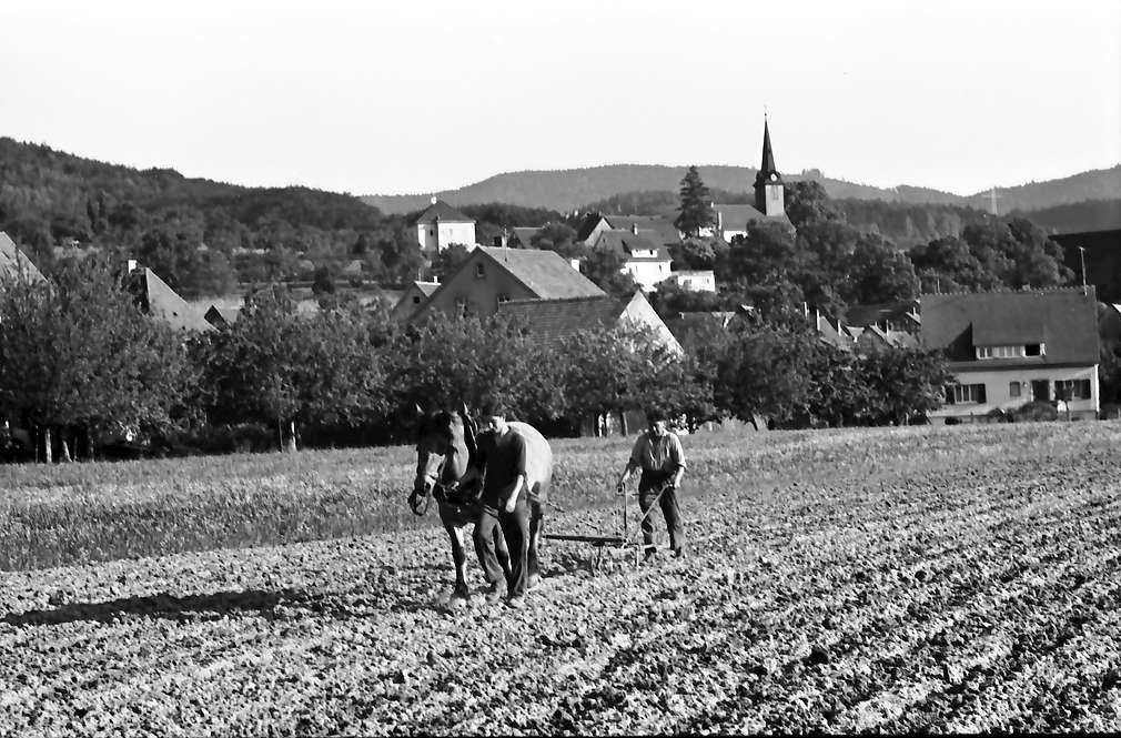 Heuweiler: Acker mit pflügendem Bauer; Hintergrund Kirche, Bild 1