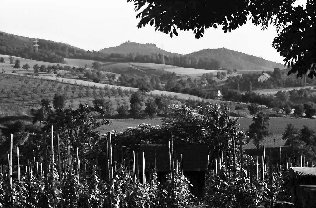Heuweiler: Blick zur Zähriger Burg über Weinberge oberhalb Heuweilers, Bild 1