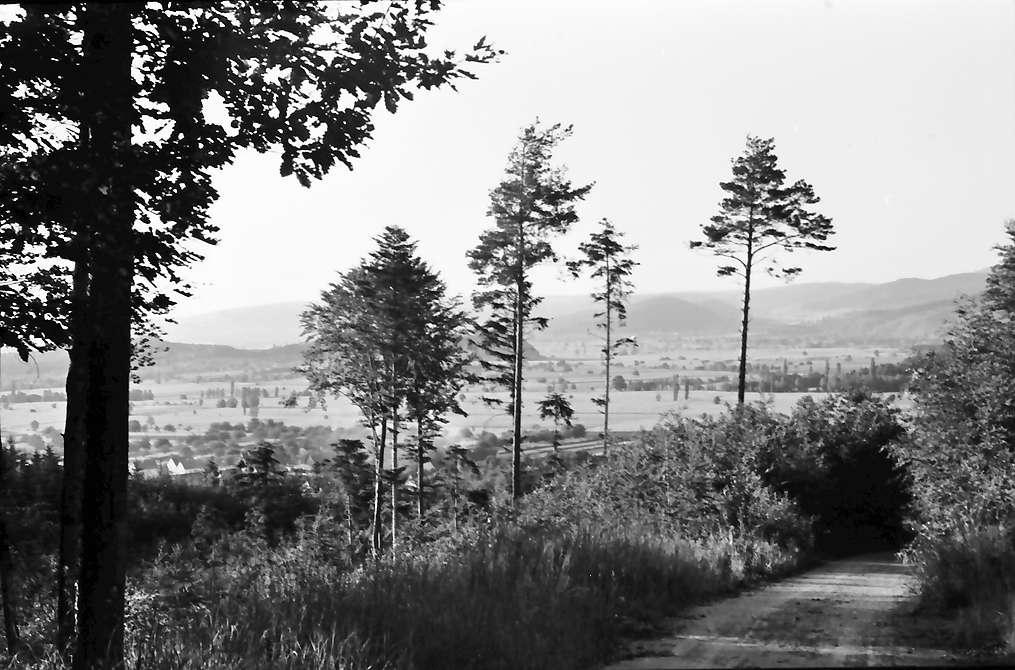 Heuweiler: Waldweg mit einzelnen Blumen; Blick zur Zähringer Burg, Bild 1