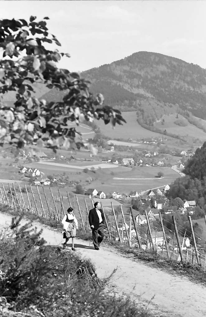 Oberglottertal: Weinberg mit Spaziergänger, Bild 1