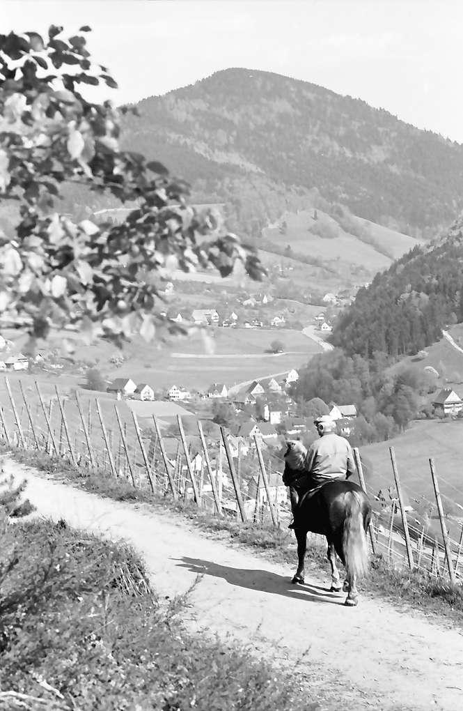Oberglottertal: Weinberg mit Reiter, Bild 1