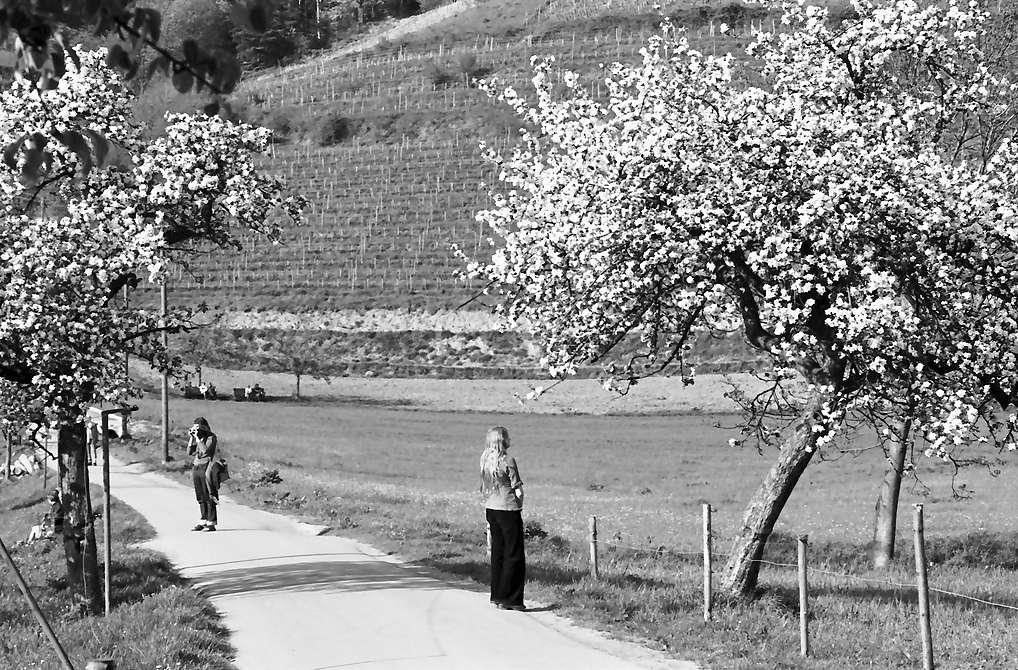 Oberglottertal: Spaziergänger unter Blüten, Bild 1