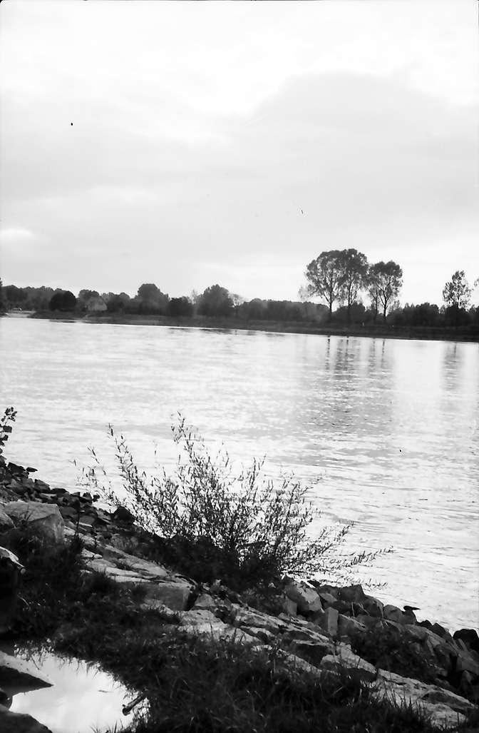 Steinmauern: Rhein an der Murgmündung bei Steinmauern, Bild 1