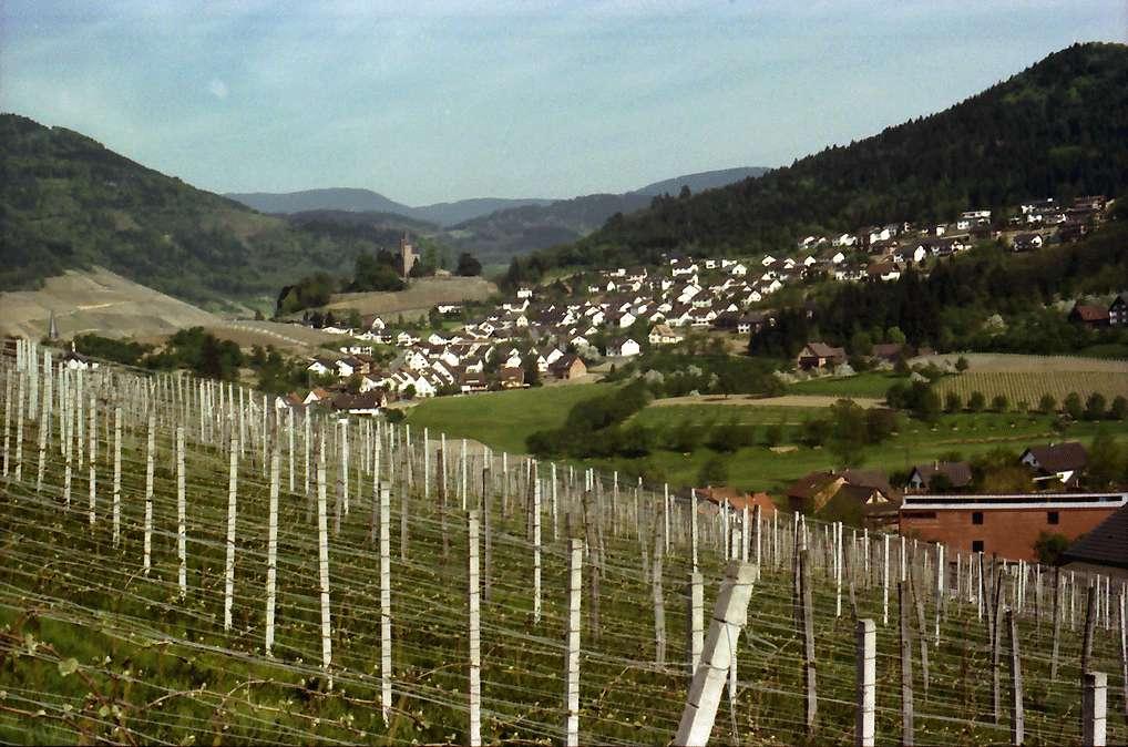 Kappelrodeck: Weinberg von Waldulm mit Blick auf Kappelrodeck, Bild 1