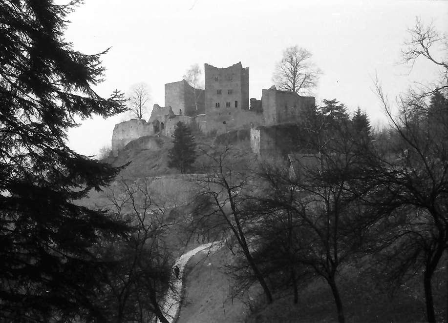 Oberkirch: Ruine Schauenburg bei Oberkirch; mit Tanne im Vordergrund, Bild 1