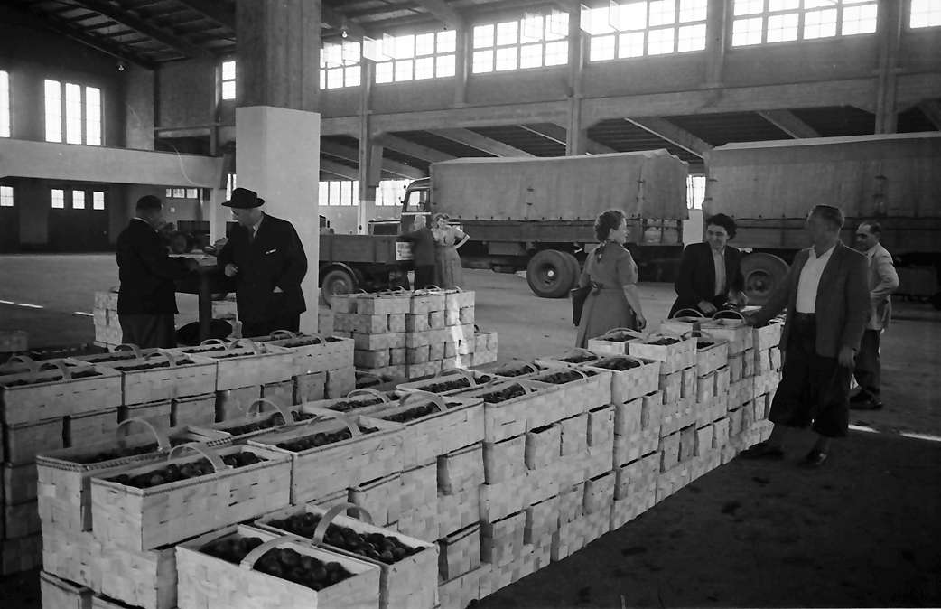 Bühl: Zwetschgenhandel; in der Obstmarkthalle, Bild 1