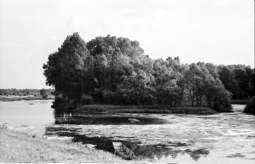 Wittenweier: Altrhein, Bild 1