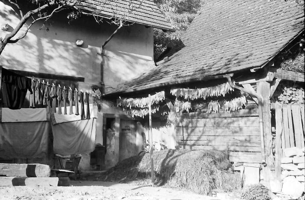 Hecklingen: Mais und Wäsche trocknen am Hof, Bild 1