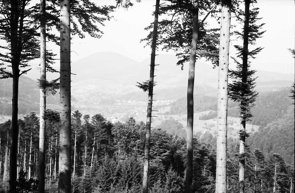Geroldsau: Blick von der Schwarzwaldhochstraße, Bild 1