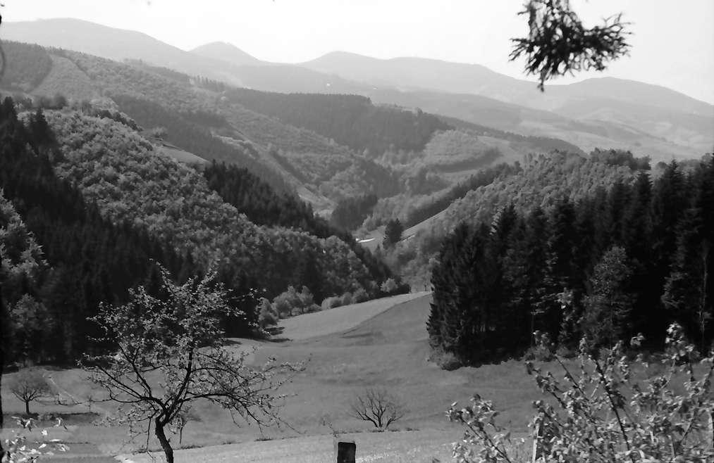 Oberharmersbach: Schwarzwaldlandschaft; Blick zum Brandenkopf, Bild 1