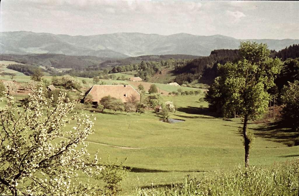 Oberbiederbach: Biederbachertal, Bild 1