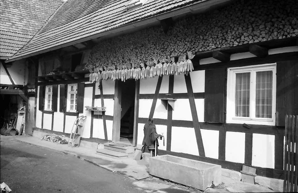 Freistett: Hanauer Landhof; Ausschnitt aufgehängter Mais, Bild 1