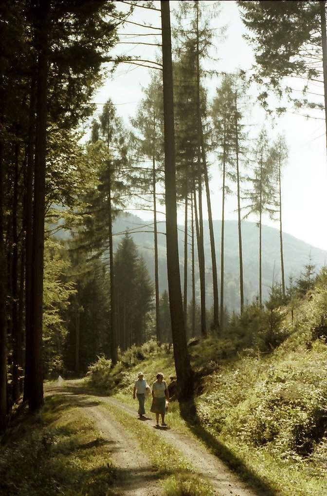 Malterdingen: Waldweg im Muckental, Bild 1