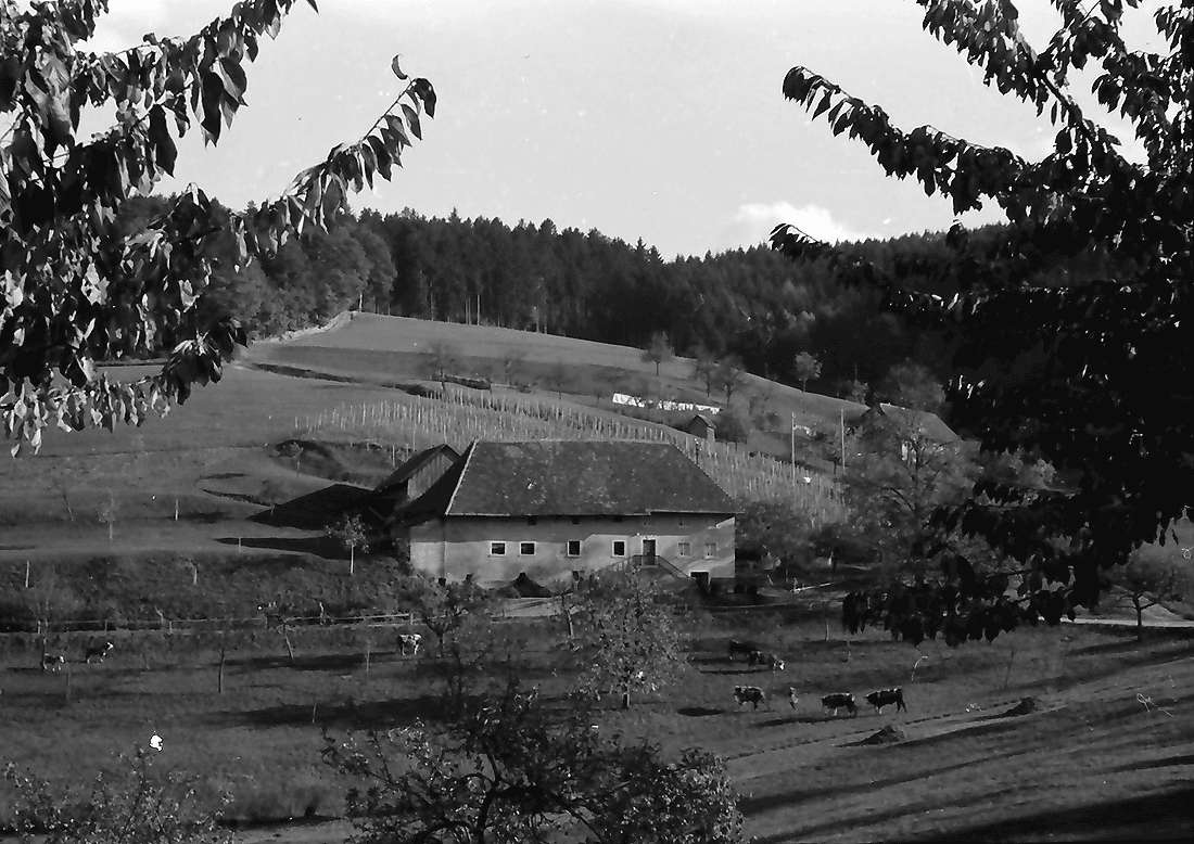 Wittnau: Hof bei Wittnau, Bild 2
