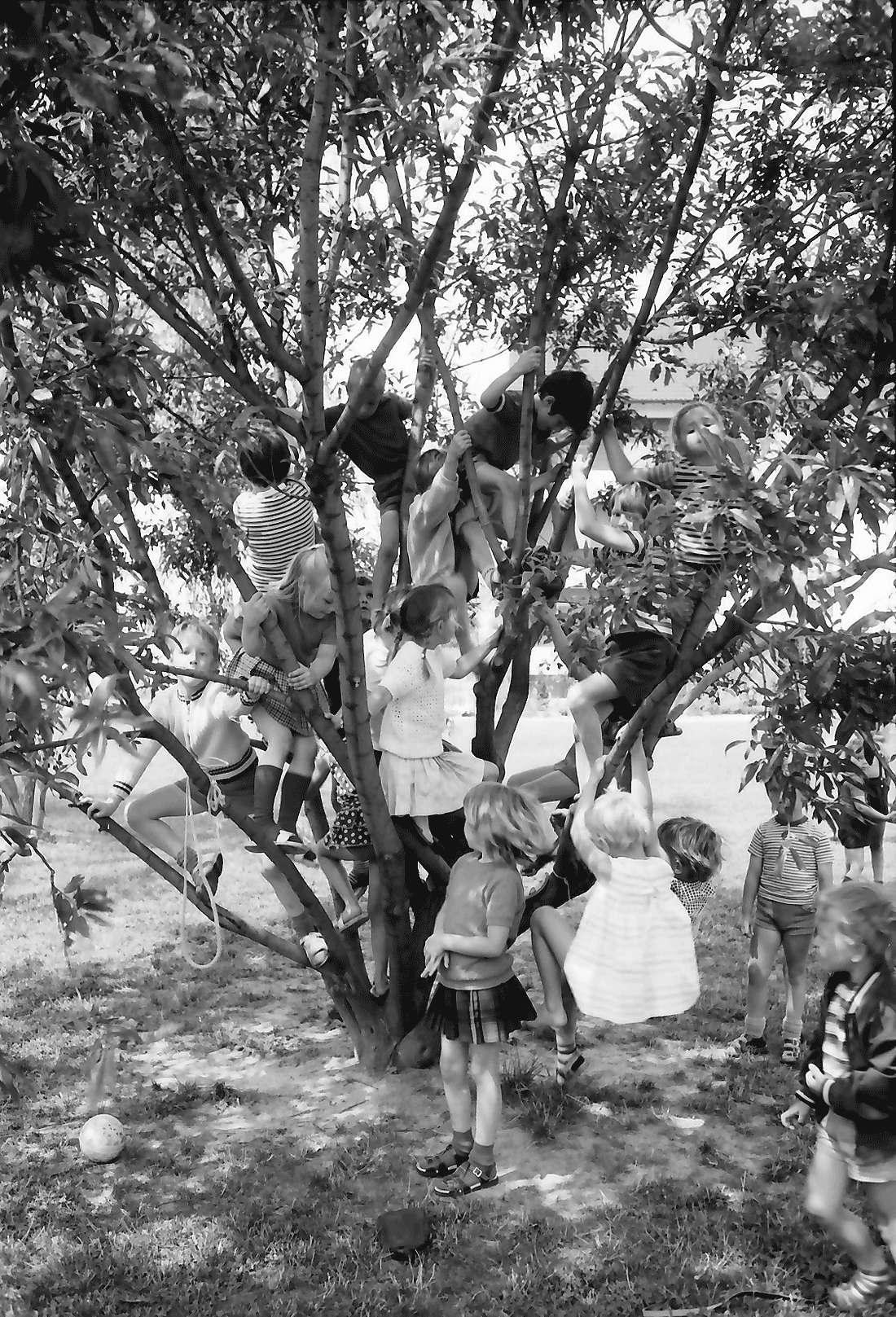 Heitersheim: Gruppe Kinder im Baum, Bild 1