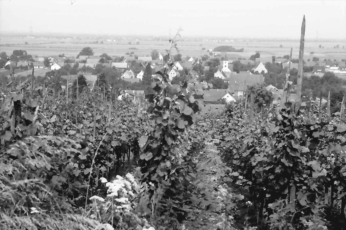 Seefelden: Weinberge bei Seefelden; mit Ort, Bild 2