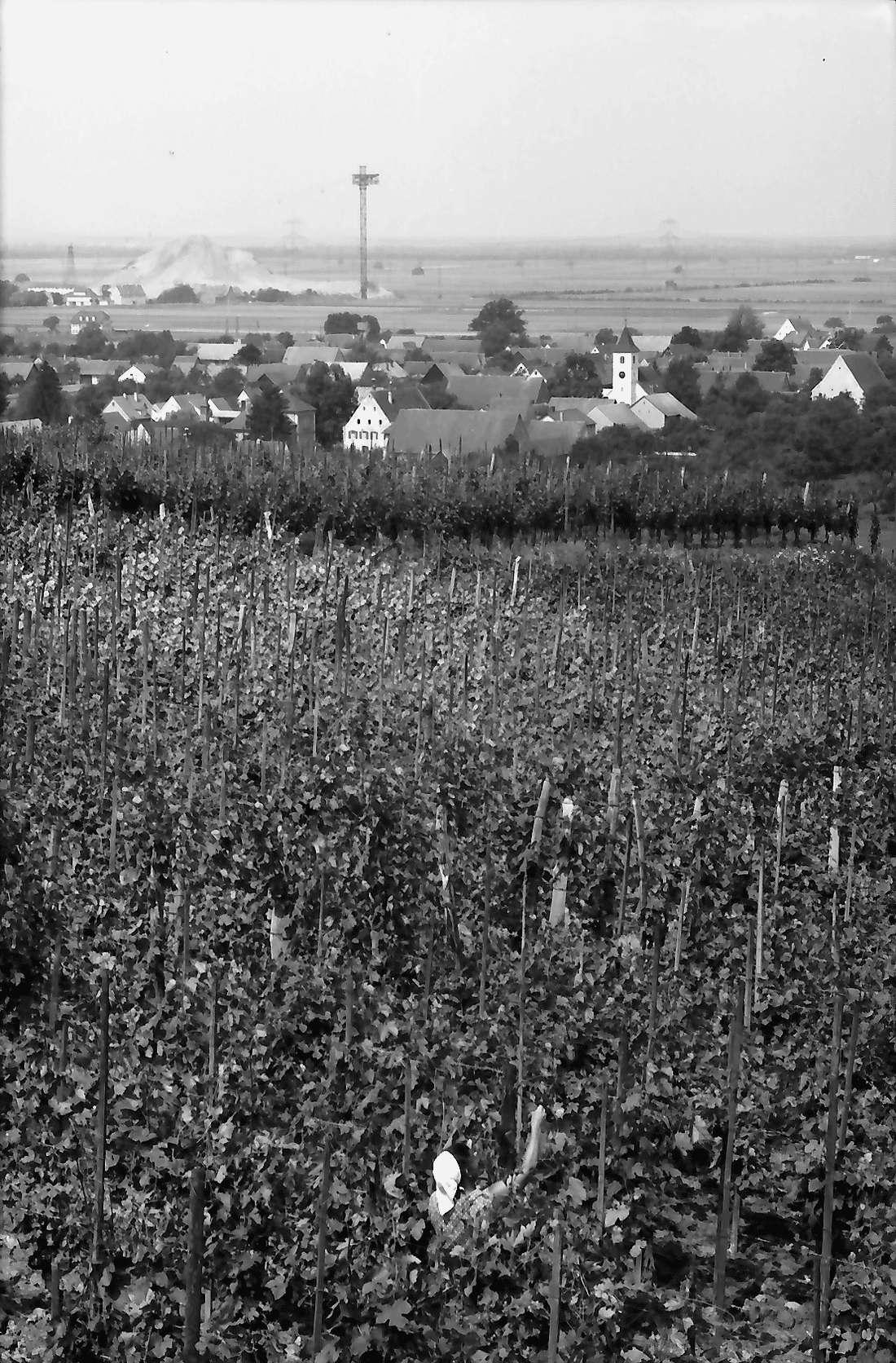 Seefelden: Weinberge; Hintergrund Kaliwerk Buggingen, Bild 1