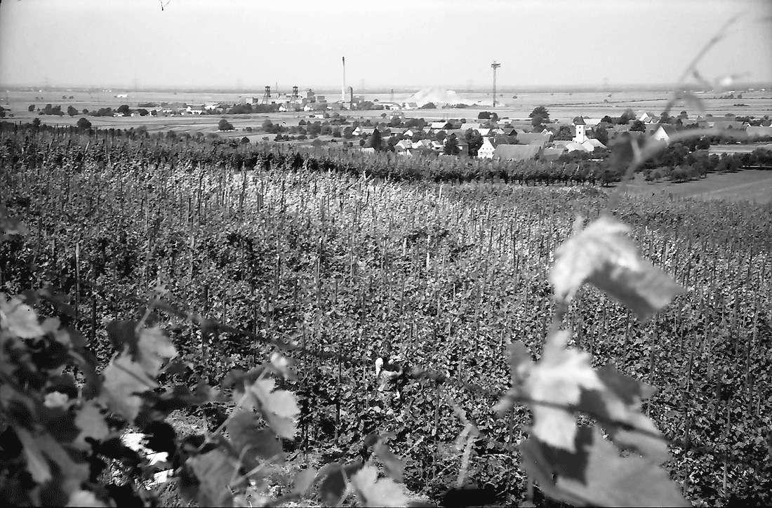 Seefelden: Weinberge; Hintergrund Kaliwerk Buggingen, Bild 2