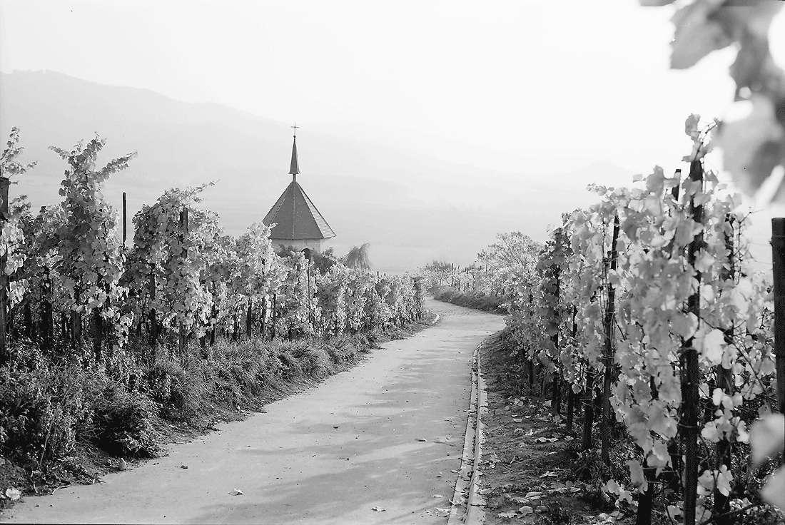 Ehrenstetten: Ehrenstetter Ölberg; Weinbergweg mit Ölbergkapelle, Bild 2